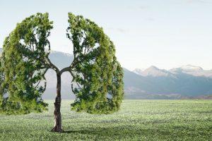 Oxygen Tree Image